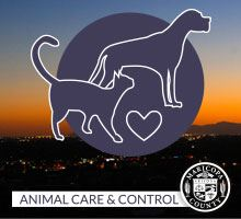 Animal Care and Control graphic